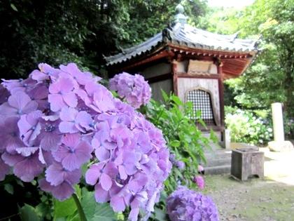 舎利堂とあじさい 矢田寺