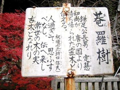 菴羅樹(あんらじゅ)の案内板