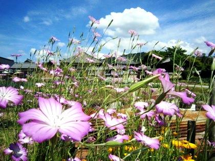 綺麗な花と飛鳥寺