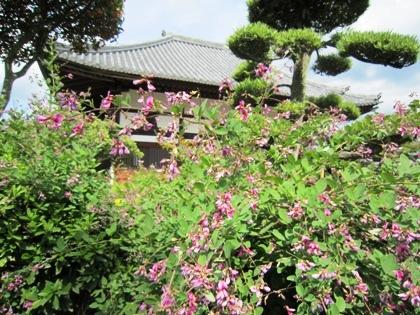 飛鳥寺の萩