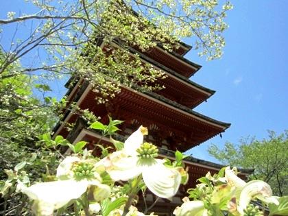 長谷寺五重塔とハナミズキ