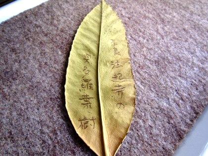法起寺の貝多羅葉樹