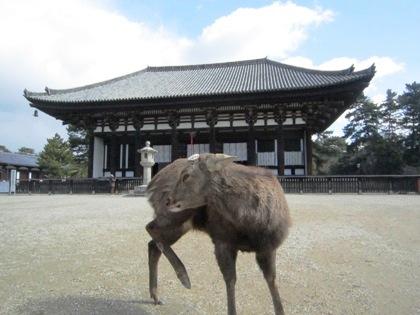 興福寺東金堂前の鹿