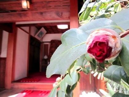 大正楼玄関口の花