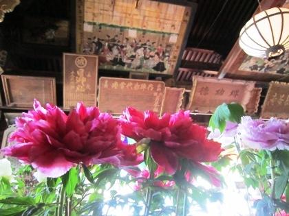 長谷寺礼堂のぼたん