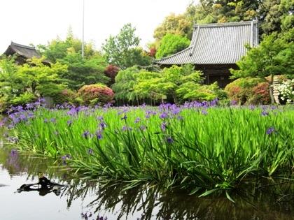 長岳寺本堂と杜若