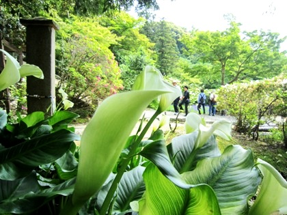 長岳寺のカラーと参拝客