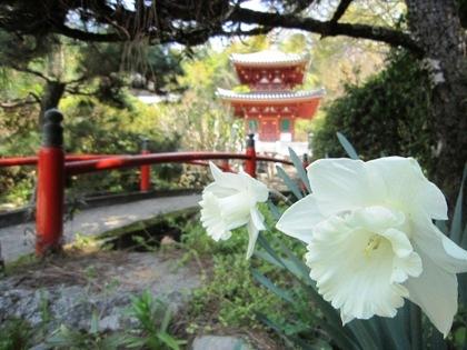 平等寺の水仙