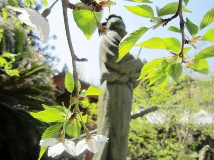 聖徳太子像と桜
