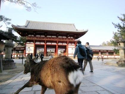 東大寺中門と鹿