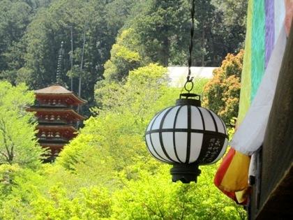 新緑の長谷寺五重塔