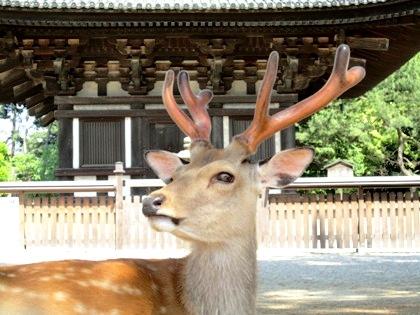 奈良公園の鹿 興福寺五重塔