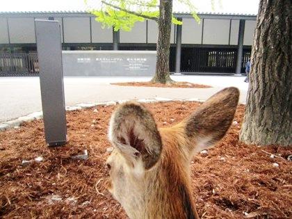 東大寺ミュージアム 奈良公園の鹿