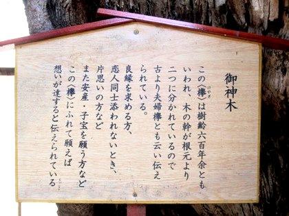 恵比須神社の御神木