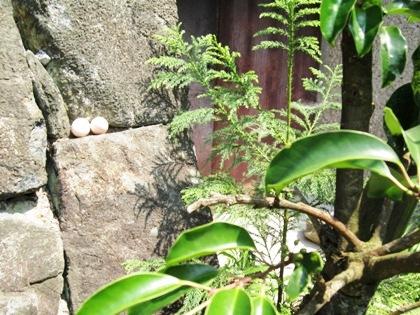 大神神社の卵 巳さん