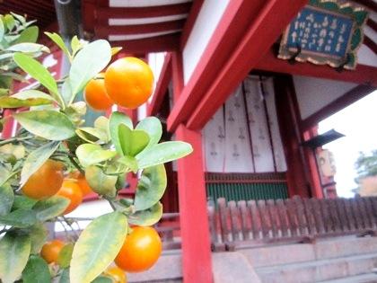 興福寺南円堂の右近の橘