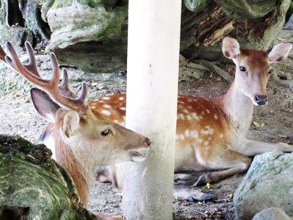 奈良国立博物館前の鹿