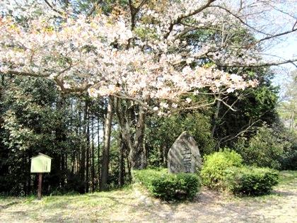 土舞台の桜 桜の開花予想