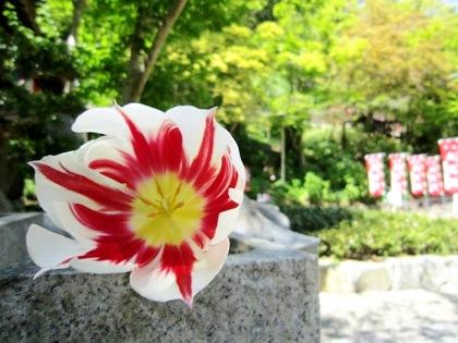 長谷寺に咲く花