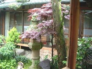 中庭 石燈籠