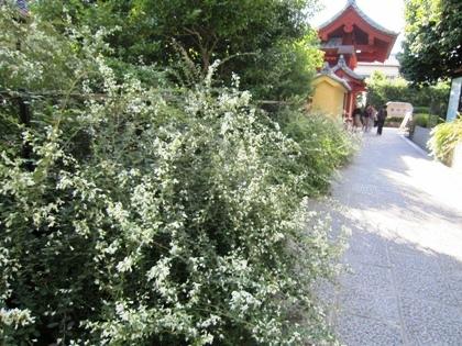 薬師寺の萩 與樂門