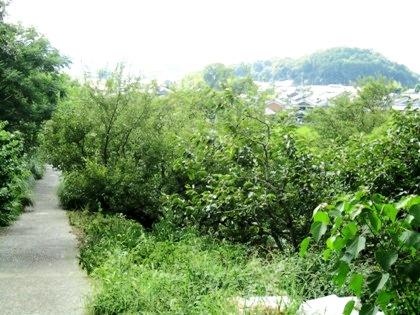 箸墓古墳から桧原神社へ通じる坂道