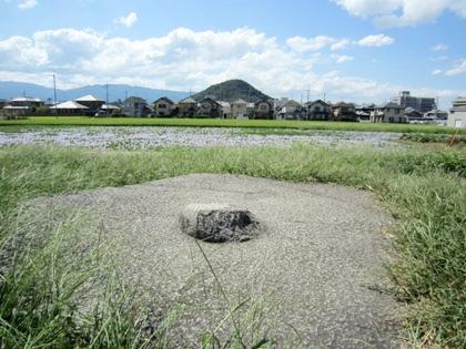 礎石 ホテイアオイの名所