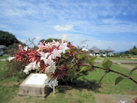 川原寺跡と秋の花