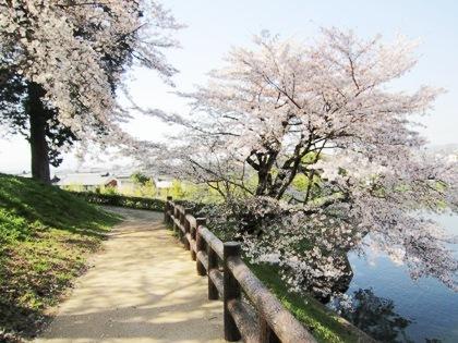 黒塚古墳と桜