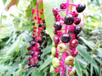桧原神社近くの植物