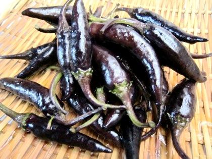 紫とうがらし 夏野菜
