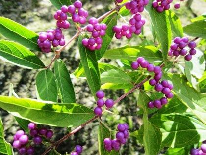 薬師寺の紫式部