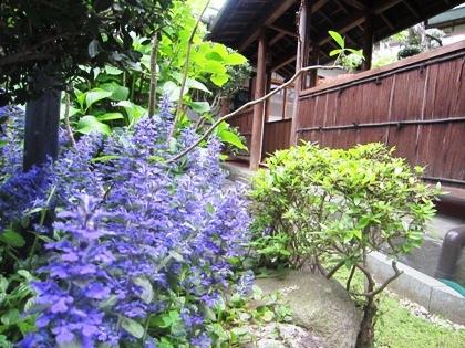 初夏の中庭風景