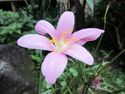 中庭に咲く花