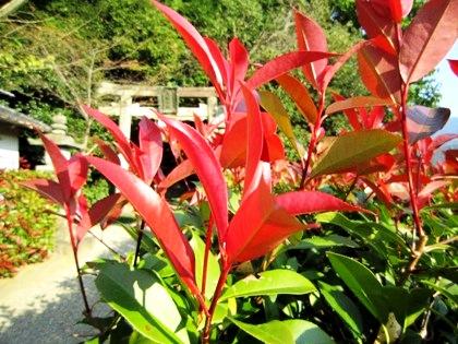 天満神社の紅葉
