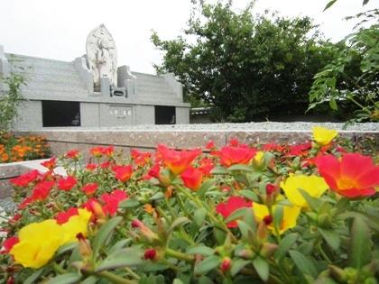 極楽寺の境内に咲く花