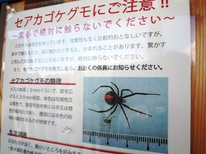 セアカゴケグモの注意書き