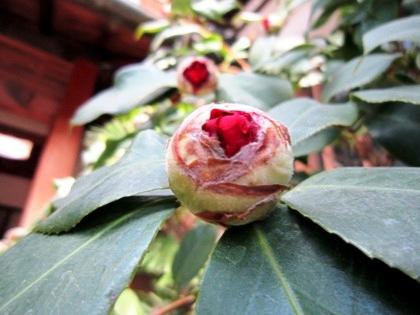 大正楼玄関先の花