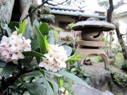 中庭に咲く春の花