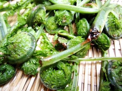 こごみ 山菜