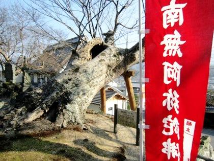玉列神社のケヤキ けやきの木