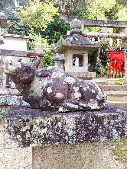 伊射奈岐神社の牛