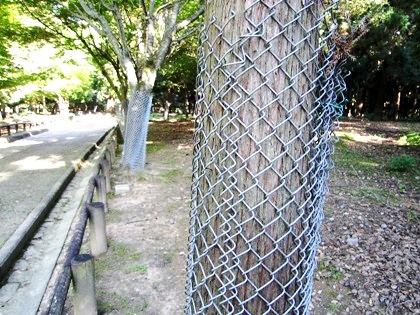 鹿対策 木のフェンス
