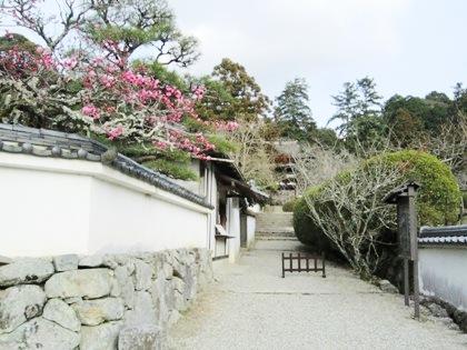 長岳寺の梅