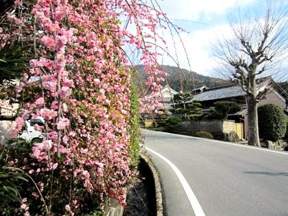 山の辺の道の梅 車谷